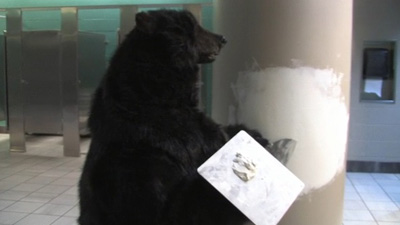 Bruins Bear Responds to Vandalizing Fan With Latest 'Hockey Rules' Commercial