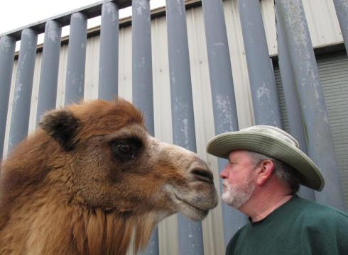 Princess the Camel Picks Her Hometown Giants to Beat Patriots in Super Bowl XLVI
