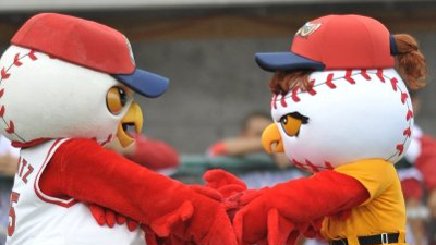 Minor League Team's Owl Mascots Announce They Are Expecting Owl Mascot Baby