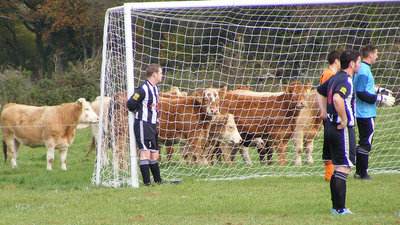 Interrupting Cow Shows Up at Soccer Game in Poland, Only One Person Finds It Funny (Video)