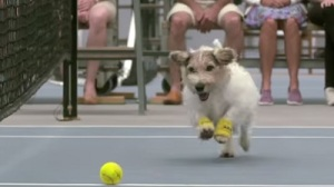 Venus Williams, Svetlana Kuznetova Use Dogs As Ball Boys In Adorable Ad (Video)