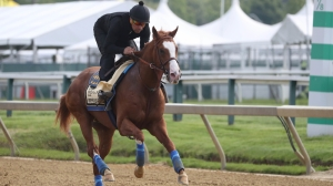2019 Preakness Stakes Odds: Improbable, War of Will Among Betting Favorites
