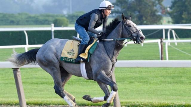 Belmont Stakes Horse Tacitus