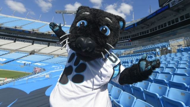 Carolina Panthers mascot Sir Purr