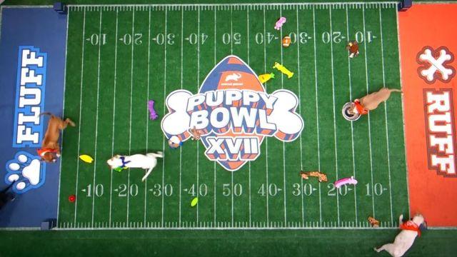 Puppy Bowl live stream
